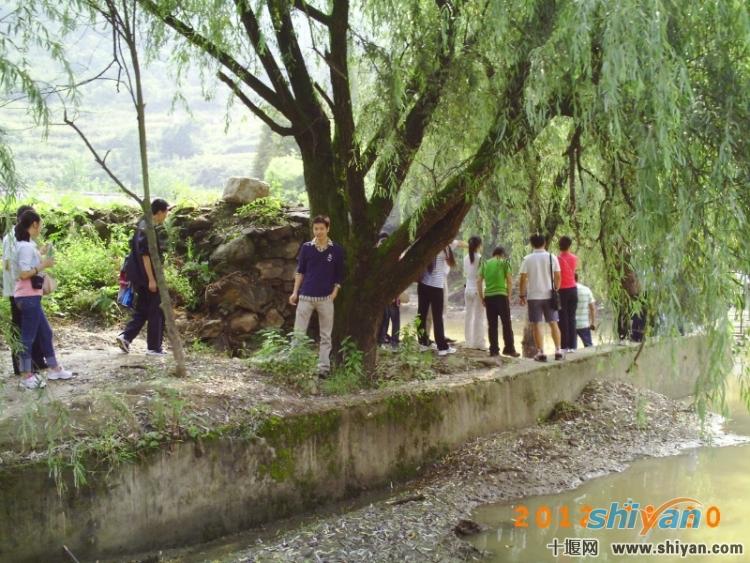 圣马岩山庄的大树下.jpg