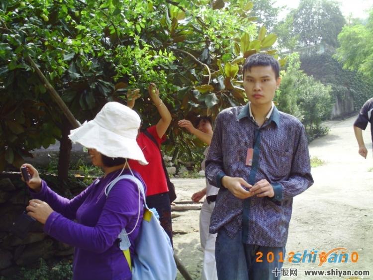 路边的枣树,主人家同意可以随意摘取.jpg