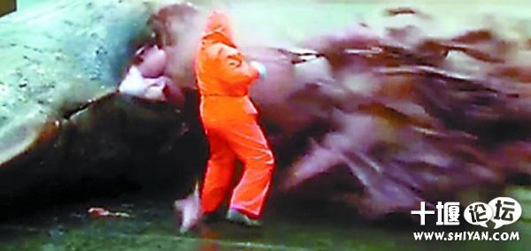 死亡抹香鲸爆炸,内脏骨头血水喷出场面让人恐怖 组图