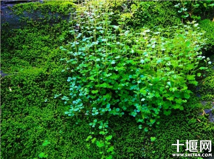 石板上长得顽强的植物.jpg