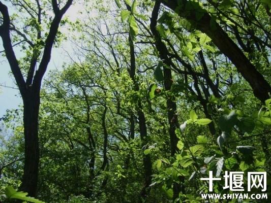 茂密的树林.jpg