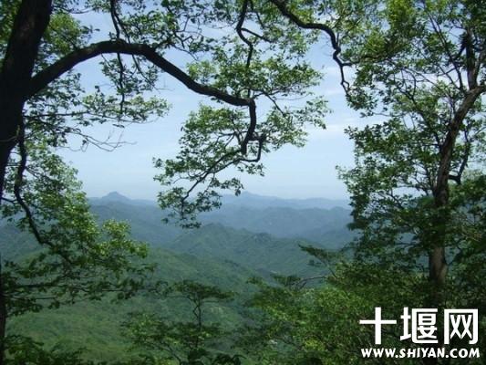 树林间勾勒出的天空美景.jpg