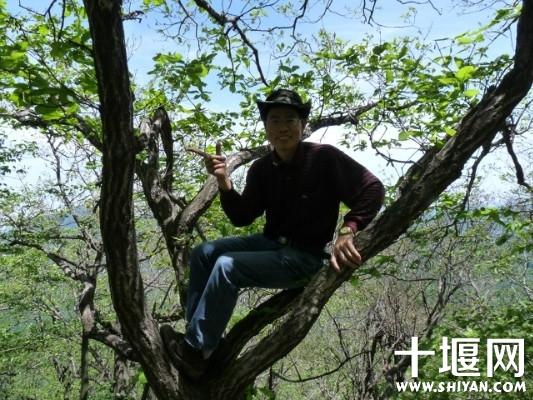树上留个影.jpg