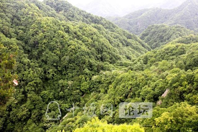 """「十堰」""""林业杯""""征文摄影十二:那林、那山、那人——标湖林场别样风景-13.jpg"""