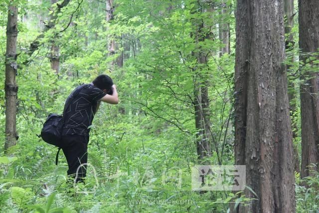 """「十堰」""""林业杯""""征文摄影十二:那林、那山、那人——标湖林场别样风景-16.jpg"""