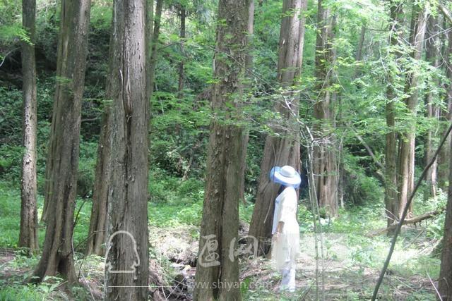 """「十堰」""""林业杯""""征文摄影十二:那林、那山、那人——标湖林场别样风景-18.jpg"""