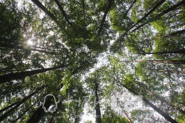 """「十堰」""""林业杯""""征文摄影十二:那林、那山、那人——标湖林场别样风景-20.jpg"""