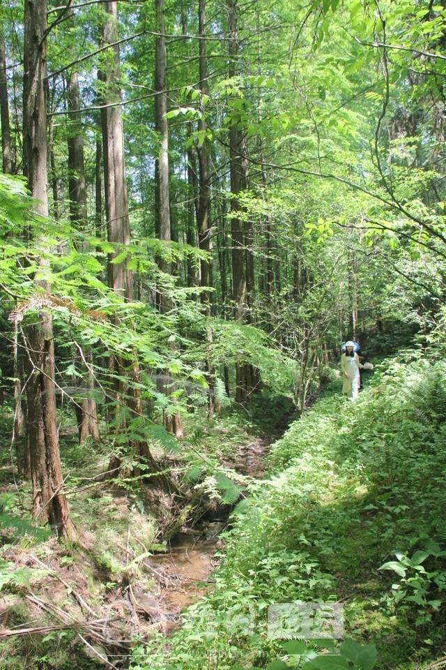 """「十堰」""""林业杯""""征文摄影十二:那林、那山、那人——标湖林场别样风景-22.jpg"""
