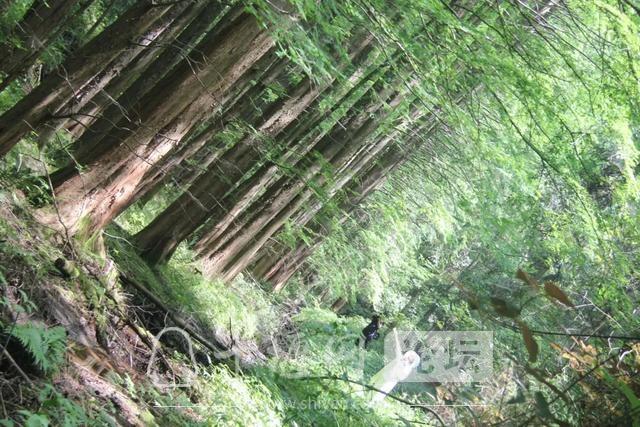 """「十堰」""""林业杯""""征文摄影十二:那林、那山、那人——标湖林场别样风景-21.jpg"""