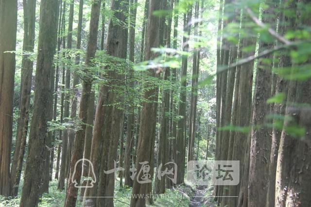 """「十堰」""""林业杯""""征文摄影十二:那林、那山、那人——标湖林场别样风景-24.jpg"""