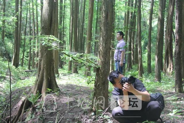 """「十堰」""""林业杯""""征文摄影十二:那林、那山、那人——标湖林场别样风景-23.jpg"""