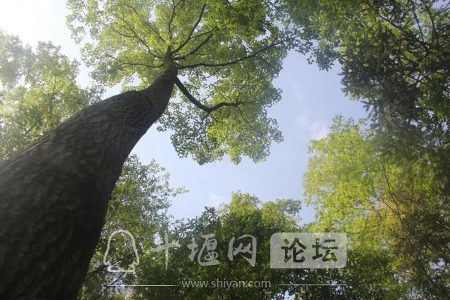 """「十堰」""""林业杯""""征文摄影十二:那林、那山、那人——标湖林场别样风景-29.jpg"""