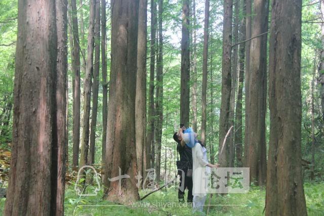 """「十堰」""""林业杯""""征文摄影十二:那林、那山、那人——标湖林场别样风景-30.jpg"""