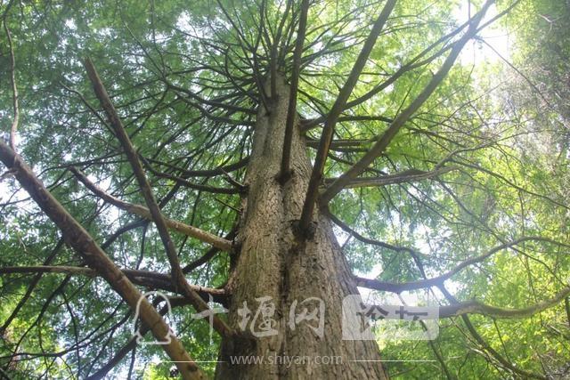 """「十堰」""""林业杯""""征文摄影十二:那林、那山、那人——标湖林场别样风景-32.jpg"""
