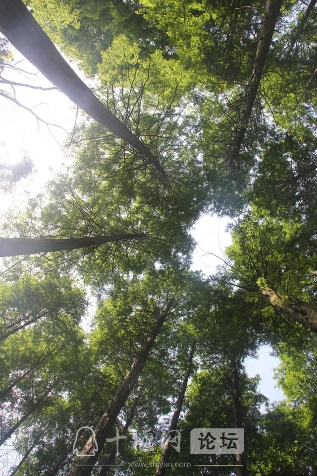 """「十堰」""""林业杯""""征文摄影十二:那林、那山、那人——标湖林场别样风景-33.jpg"""