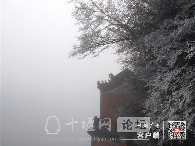 零下4℃!赶紧去湖北武当山上看雾凇奇景-3.jpg