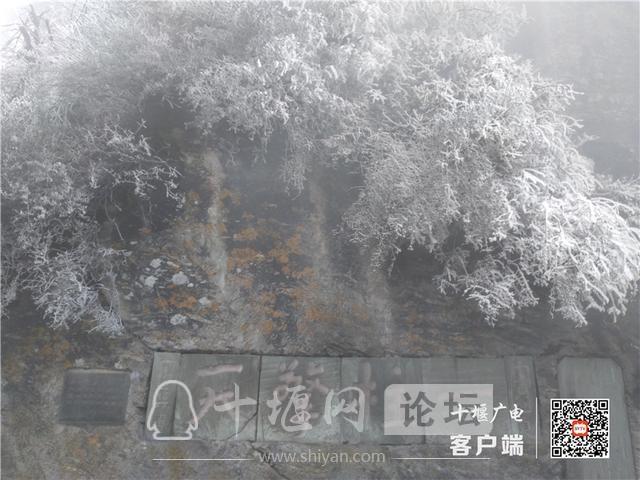 零下4℃!赶紧去湖北武当山上看雾凇奇景-10.jpg