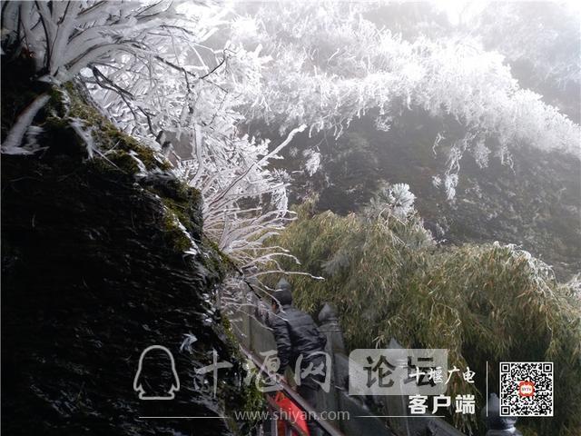 零下4℃!赶紧去湖北武当山上看雾凇奇景-7.jpg