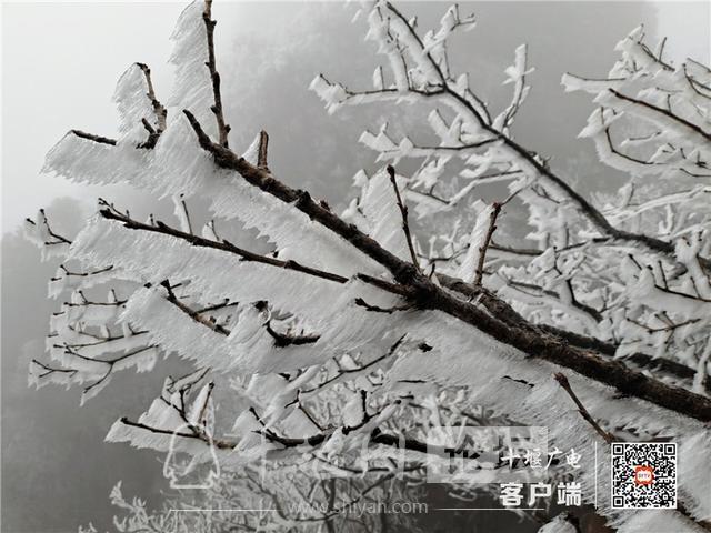 零下4℃!赶紧去湖北武当山上看雾凇奇景-12.jpg