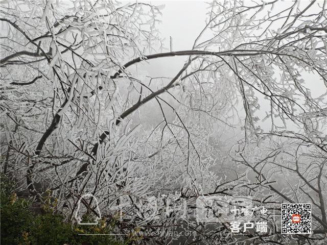 零下4℃!赶紧去湖北武当山上看雾凇奇景-11.jpg