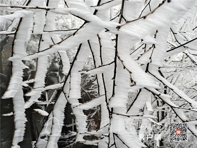 零下4℃!赶紧去湖北武当山上看雾凇奇景-9.jpg