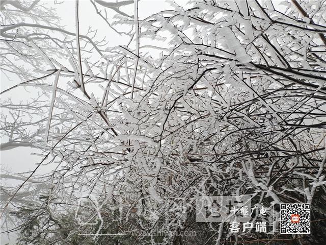 零下4℃!赶紧去湖北武当山上看雾凇奇景-8.jpg
