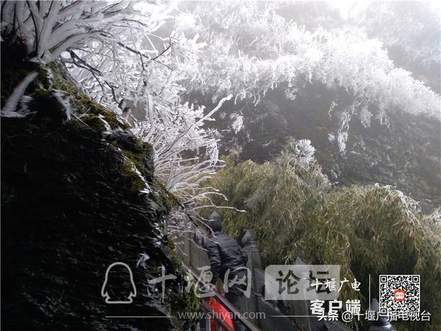 武当山降下入冬后第一场雪!多图带你看雪景-7.jpg