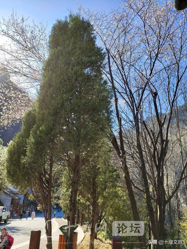 春暖花开,来武当山赏花览美景-2.jpg