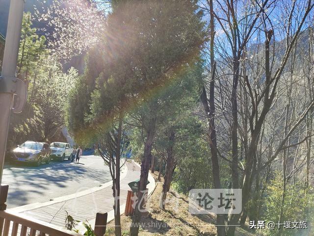 春暖花开,来武当山赏花览美景-3.jpg