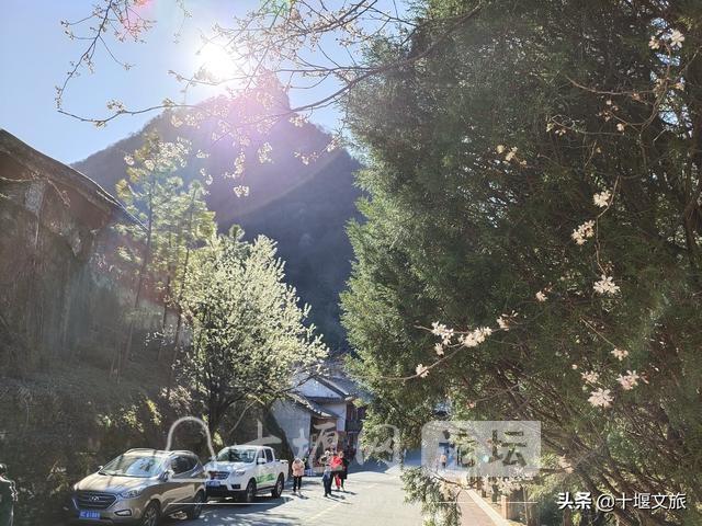 春暖花开,来武当山赏花览美景-1.jpg