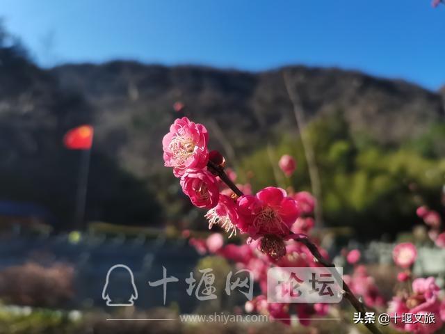 春暖花开,来武当山赏花览美景-5.jpg