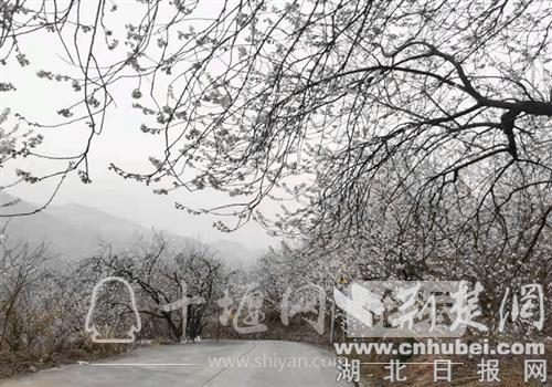 十堰市张湾区汉江路街道樱花溪谷点亮城市之美-3.jpg