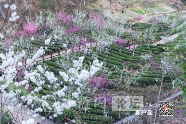 春暖花开看十堰|茅箭东沟,花开正艳-1.jpg