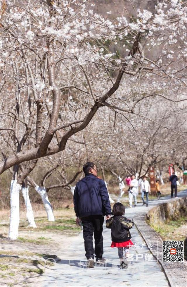 春暖花开看十堰|茅箭东沟,花开正艳-2.jpg