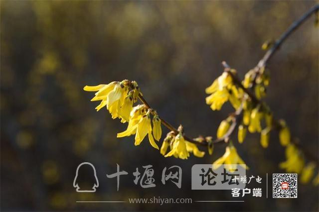 春暖花开看十堰|茅箭东沟,花开正艳-6.jpg