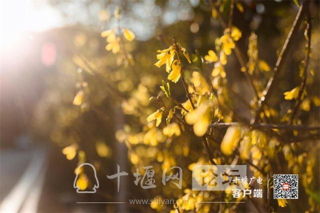 春暖花开看十堰|茅箭东沟,花开正艳-4.jpg