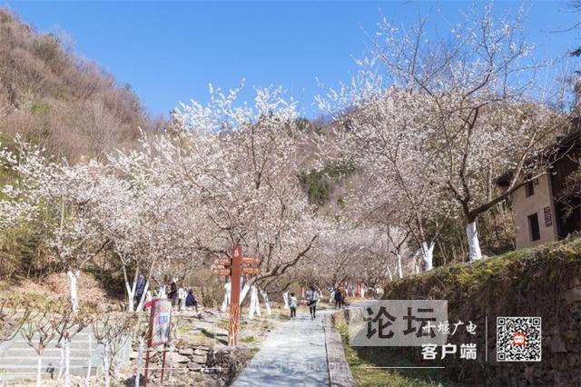 春暖花开看十堰|茅箭东沟,花开正艳-11.jpg