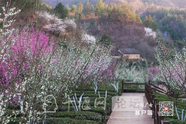 春暖花开看十堰|茅箭东沟,花开正艳-7.jpg