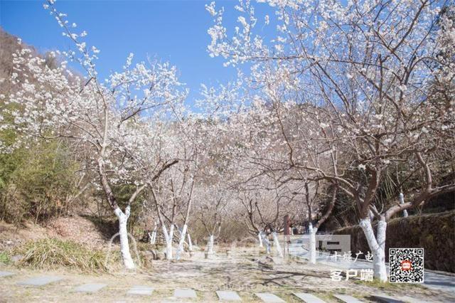 春暖花开看十堰|茅箭东沟,花开正艳-13.jpg