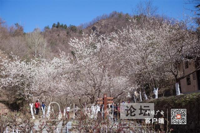 春暖花开看十堰|茅箭东沟,花开正艳-14.jpg