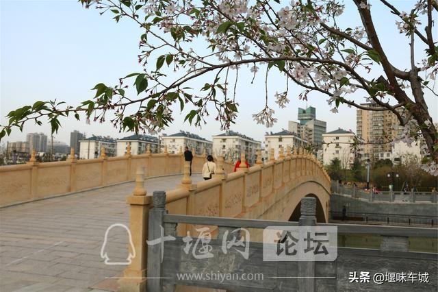 十堰百二河生态修复工程河畔春光美,市民休闲亲水游玩更逍遥-13.jpg