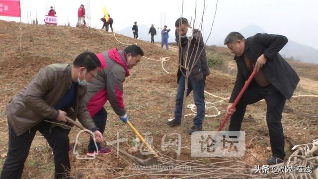 """郧西:""""十三五""""林业生态建设成果斐然-2.jpg"""