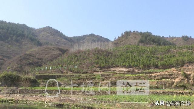"""郧西:""""十三五""""林业生态建设成果斐然-1.jpg"""