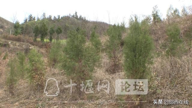 """郧西:""""十三五""""林业生态建设成果斐然-6.jpg"""