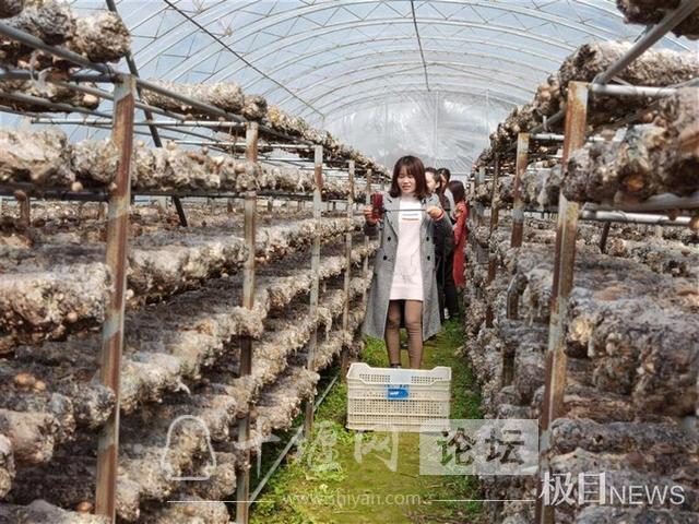 房县女青年文龙香返乡创业,带动800多人脱贫致富奔小康-2.jpg