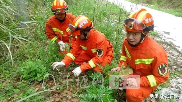 竹溪县:接到报警称办公室有蛇 消防员小哥哥赶到现场一看却笑了……-3.jpg