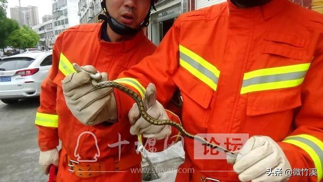 竹溪县:接到报警称办公室有蛇 消防员小哥哥赶到现场一看却笑了……-2.jpg