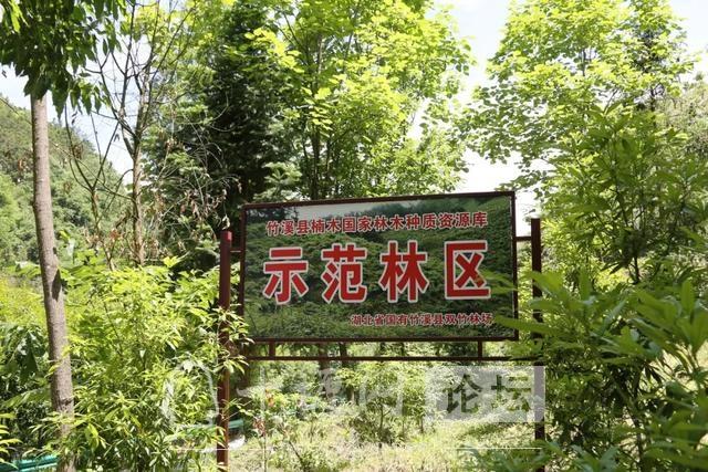 """「十堰」林业杯""""征文摄影十六:双竹林场:生态优先 绿色发展-2.jpg"""