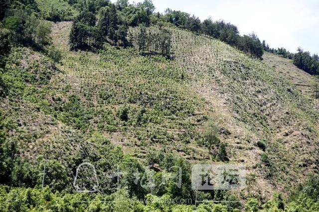 """「十堰」林业杯""""征文摄影十六:双竹林场:生态优先 绿色发展-9.jpg"""