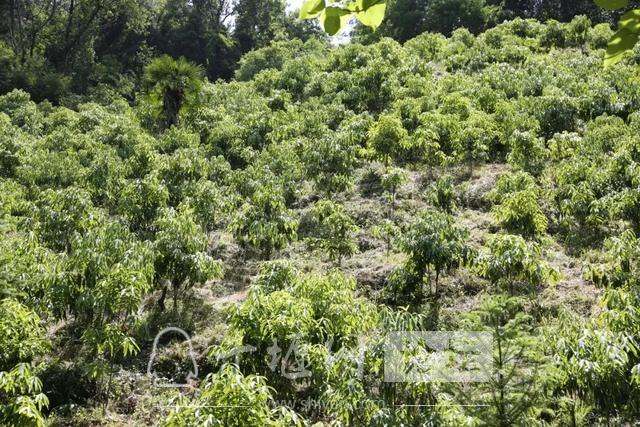 """「十堰」林业杯""""征文摄影十六:双竹林场:生态优先 绿色发展-8.jpg"""